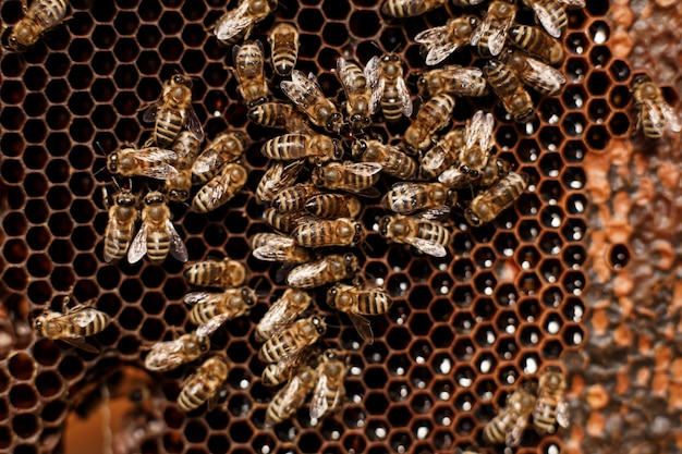 Natural color close up honeycomb in wooden beehive with bees on it