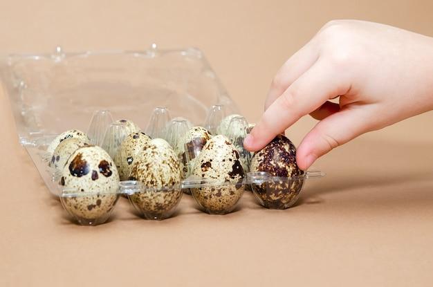 Натуральные цветные перепелиные яйца в руках ребенка, копия пространства. пасхальная тема. место для текста