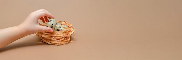 Натуральные цветные перепелиные яйца в руках ребенка, копия пространства. пасхальная тема. перепелиные яйца в гнезде на однородном фоне. место для текста