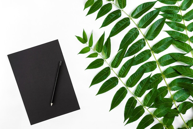 Натуральная композиция с альбомом и карандашами на белом столе, украшенном зелеными ветками