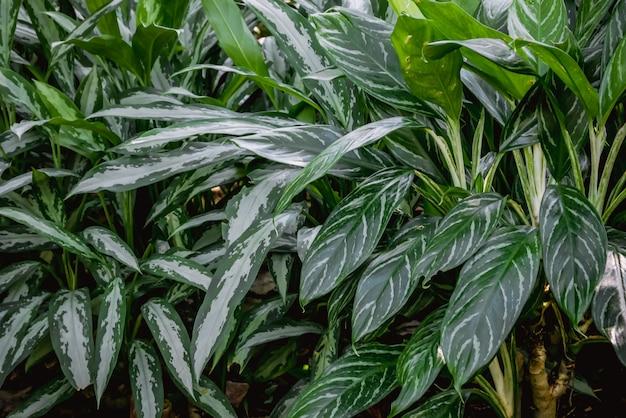 Фоновая текстура тропических цветов и листьев natural concept