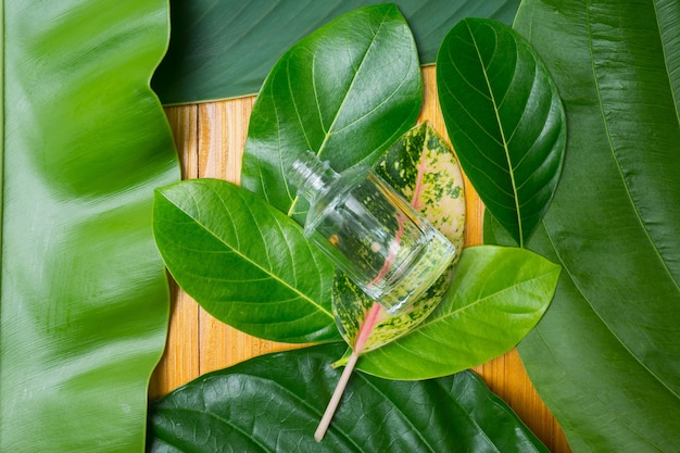 Natural cosmetics bottle containers on green leaf backgroundt