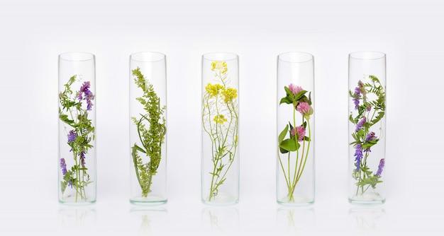식물과 꽃의 천연 화장품 유기농 제품, 피부 관리 용 허브 화장품