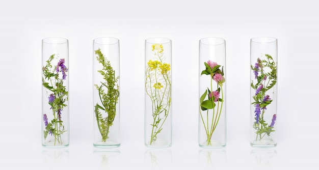 Natural cosmetics organic product from plants and flowers, herbal cosmetics for skin care