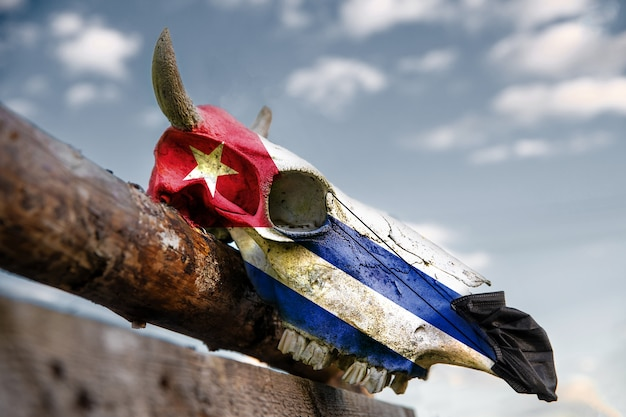 Natural cow skull on wooden fence with cuba flag. protective medical mask is put on in front