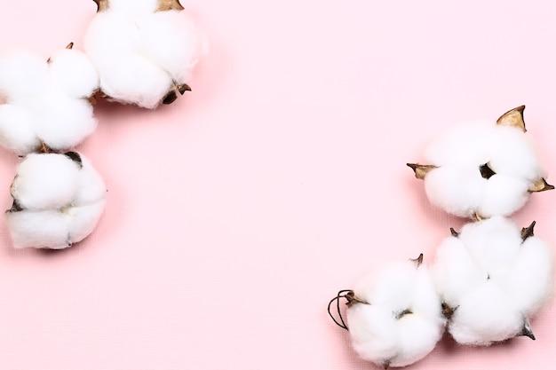 Естественная творческая пастельная концепция. хлопковые цветы на нежном розовом фоне