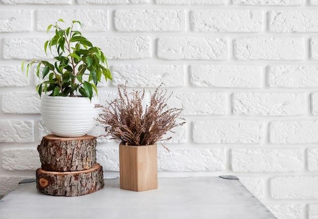 홈 인테리어의 자연 장식입니다. 냄비에 ficus 식물과 흰색 벽돌 벽 배경에 나무 그루터기. 복사 공간