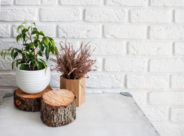 홈 인테리어의 자연 장식입니다. 냄비에 ficus 식물과 흰색 벽돌 벽 배경에 나무 그루터기.