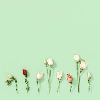 柔らかい緑の背景に自然な乾燥した装飾的な花、葉、花びらのパターン。花柄