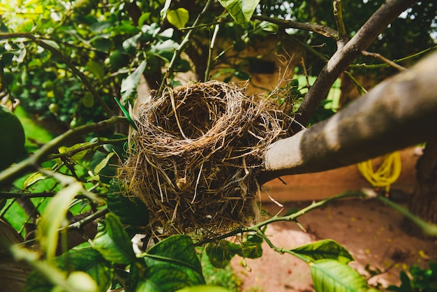 Natural empty nest of birds.