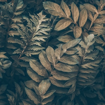 Natural fabulous background abstract leaf texture brown and green leaves dark art moody floral