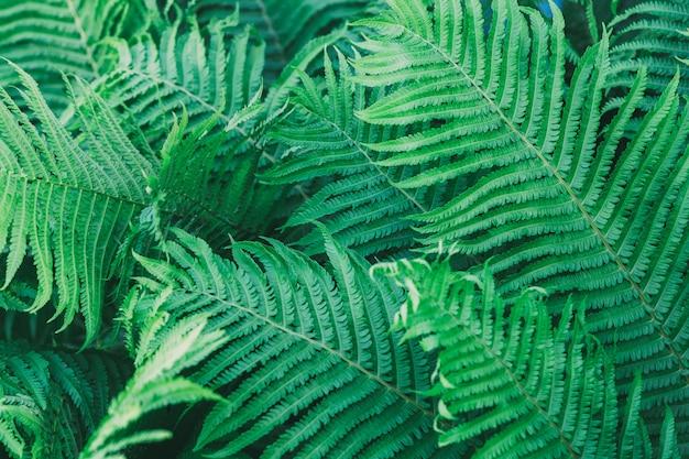 Natural fern leaves