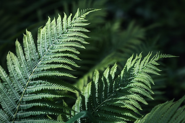 Natural floral fern background