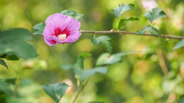 自然の花、緑の葉と露の滴それは爽やかな概念を提供します。