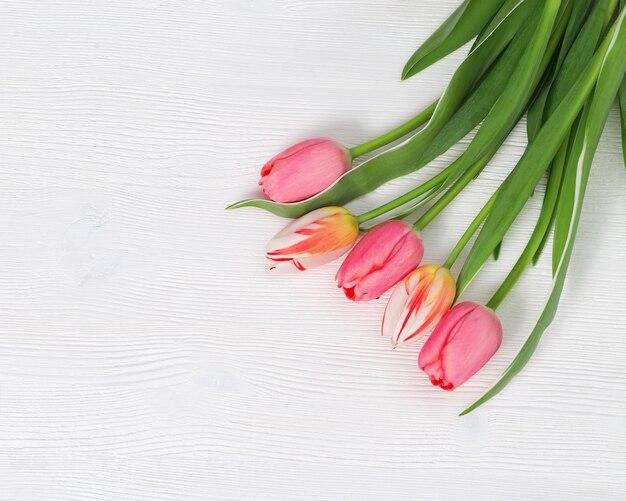 자연 꽃 튤립 분홍색과 흰색 나무에 흰색 색깔.