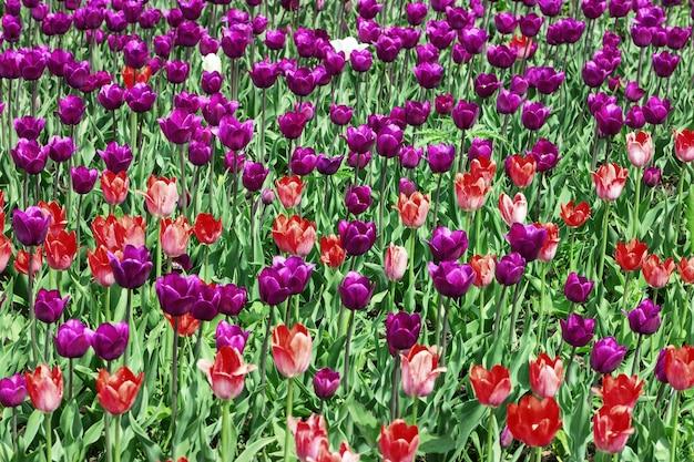 많은 밝은 꽃과 자연 꽃 배경