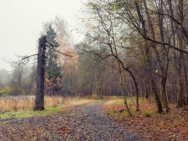 Естественный туманный осенний пейзаж со сломанной сосной. мягкий фокус.
