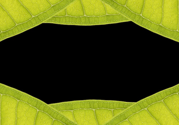 Natural frame from leaf with space for text on black