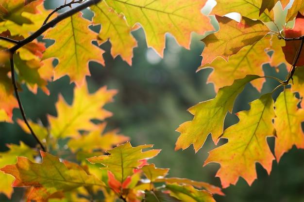 秋の森の色とりどりの葉、秋の公園の鮮やかな葉で作られた自然なフレーム。
