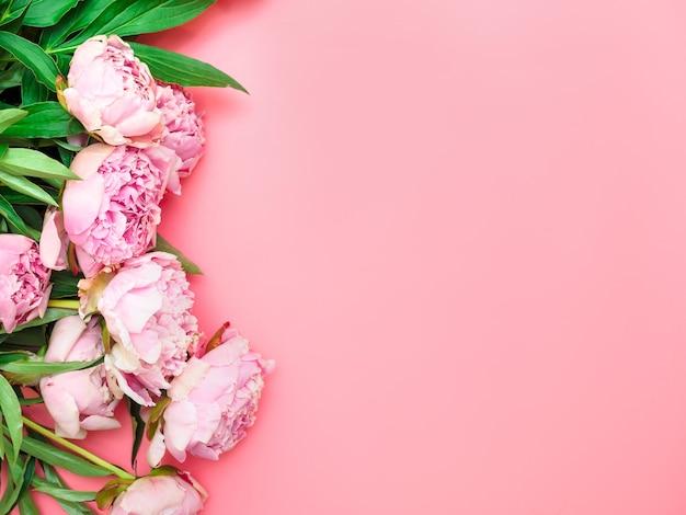 분홍색 배경에 자연 정원 분홍색 모란