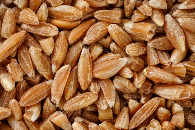 Natural  of a grain of cereal seeds, close-up