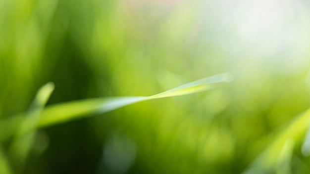 Natural grass close up