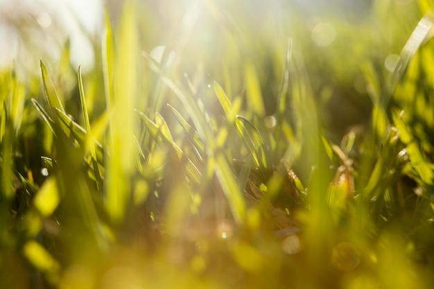 自然草のクローズアップ