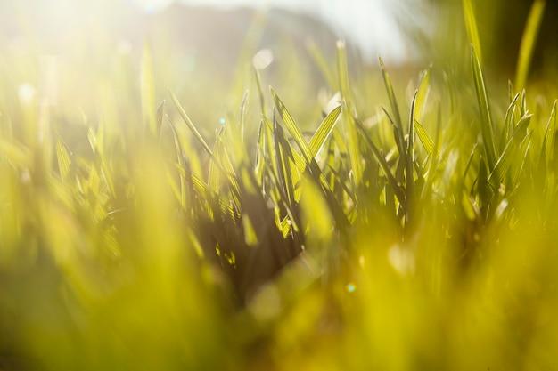 Естественная трава крупным планом