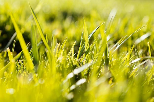 천연 잔디를 닫습니다.