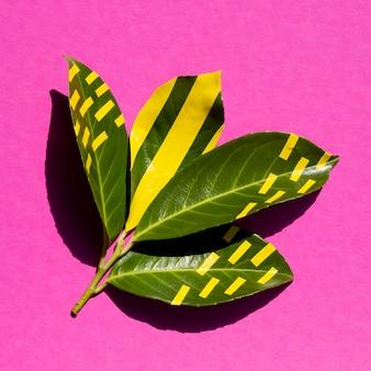 잎에 자연적인 녹색과 인공적인 황색