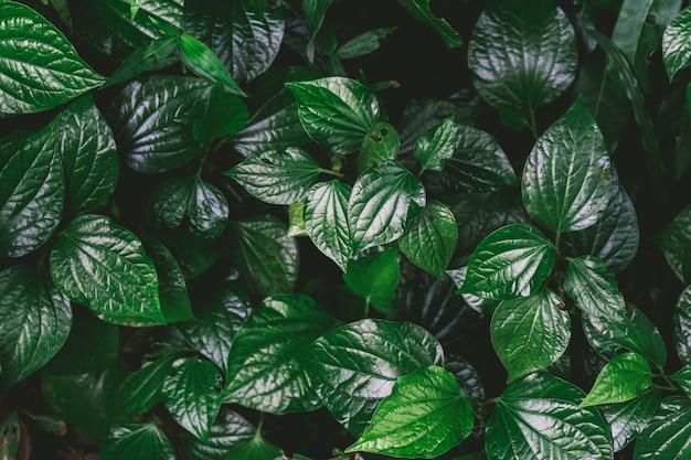 Natural green background of green leaf