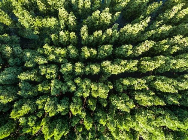 春の森の自然緑の背景。