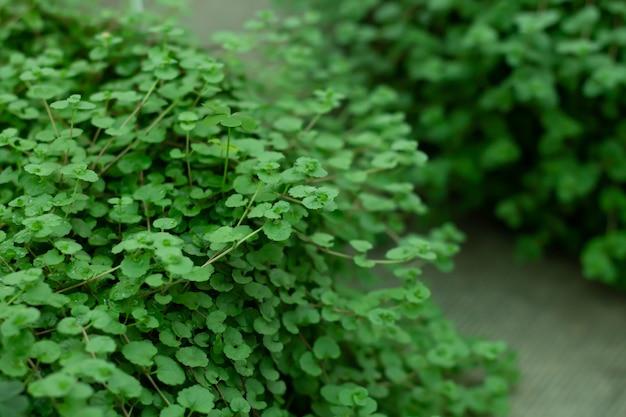 녹색 잎의 자연 녹색 배경