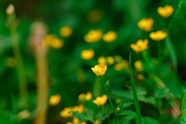 노란 꽃의 자연 녹색 배경