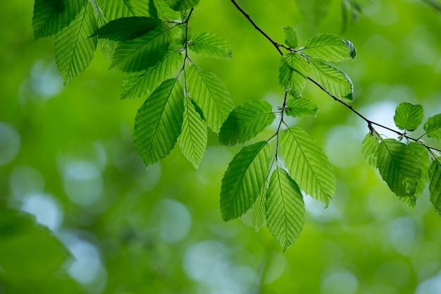自然な緑の背景