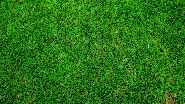 自然の緑、美しい葉、人工芝のカーペット、上面図