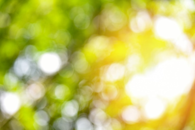 自然の緑のボケ味と黄色の日光のカラフルなテクスチャ背景
