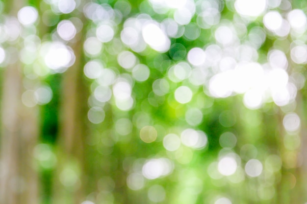 Natural green bokeh from tree abstract background