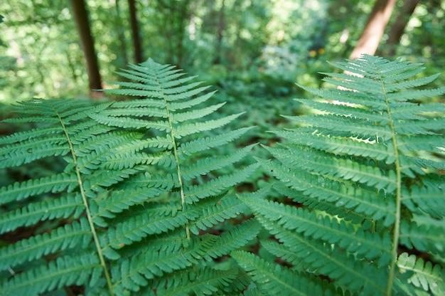 森の中の自然の緑のシダをクローズアップ
