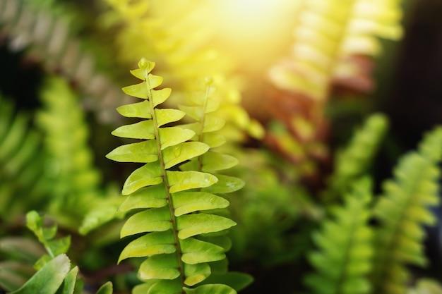 Натуральные зеленые листья папоротника с мягким солнечным светом.
