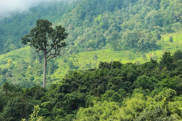Natural green forest surrounded by mountain from countryside thailand.