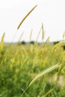 Натуральная зеленая трава размытым дизайном