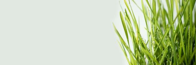 背景として自然な緑の草のクローズアップ