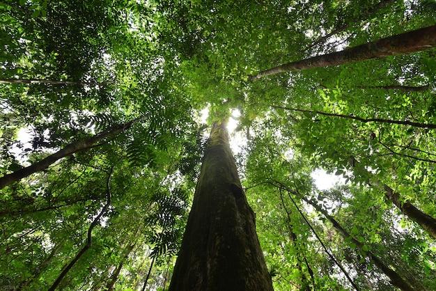 森の中の自然緑