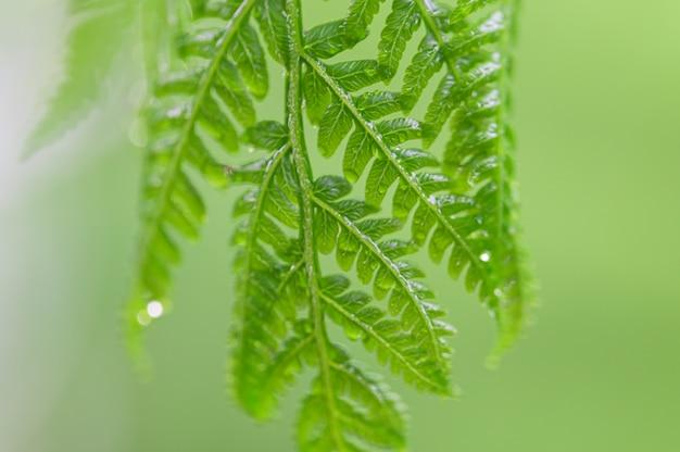 自然の緑の葉の背景とボケ味