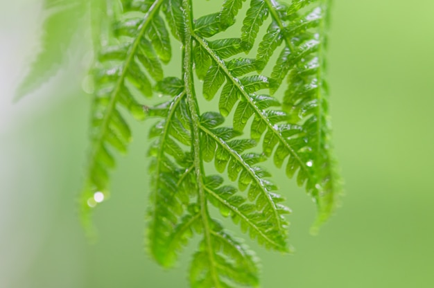 Natural green leaf background and bokeh