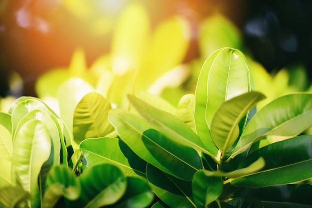 Natural green leaf on blurred sunlight  background in garden ecology fresh leaves tree close up beautiful plant in the nature forest summer