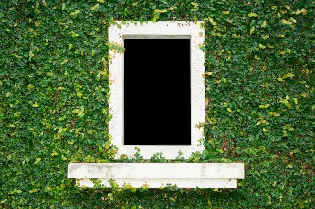 흰색 창 배경으로 자연 녹색 잎 잔디 커버 벽