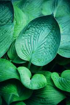 Natural green leaves background. tropical leaf texture. nature concept