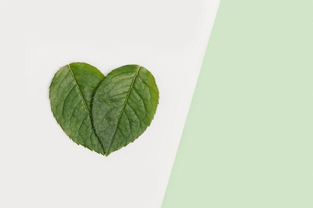 Натуральные зеленые листья в форме сердца на светлом фоне пастельных тонов